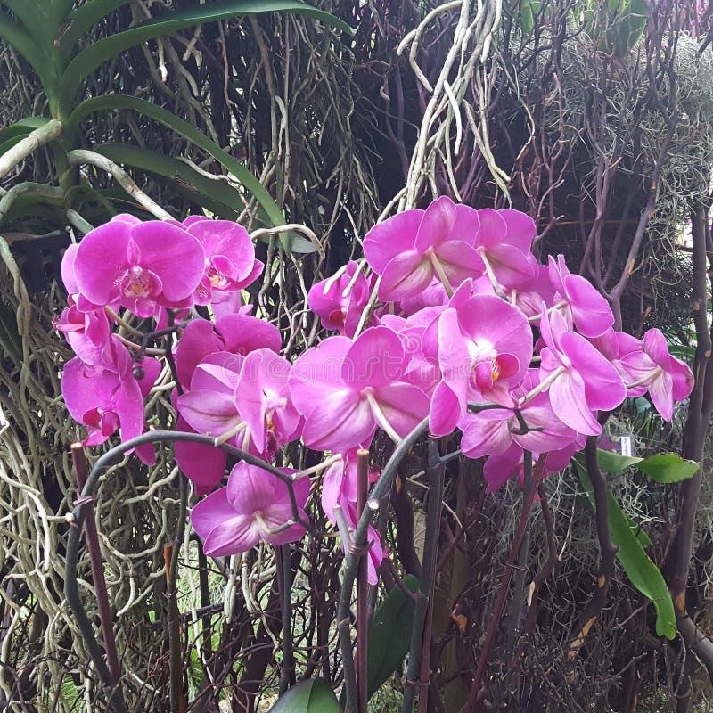 Букет орхидей стоковое изображение
