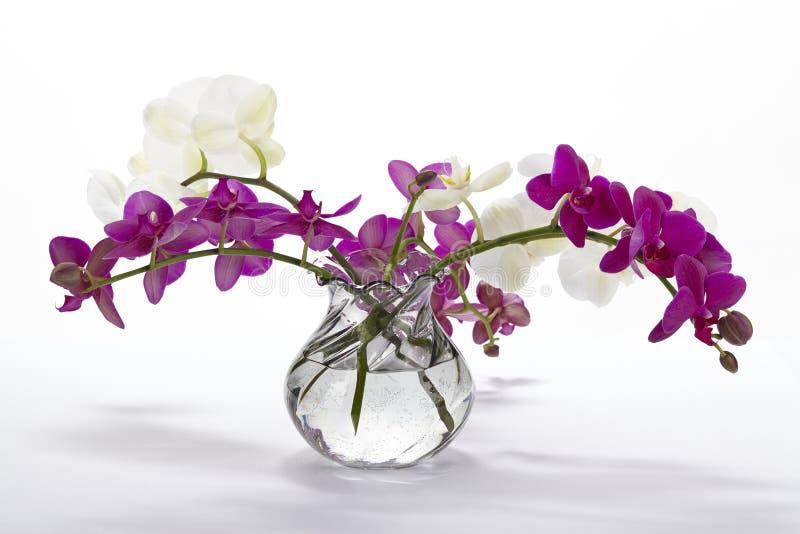 Букет орхидей стоковая фотография