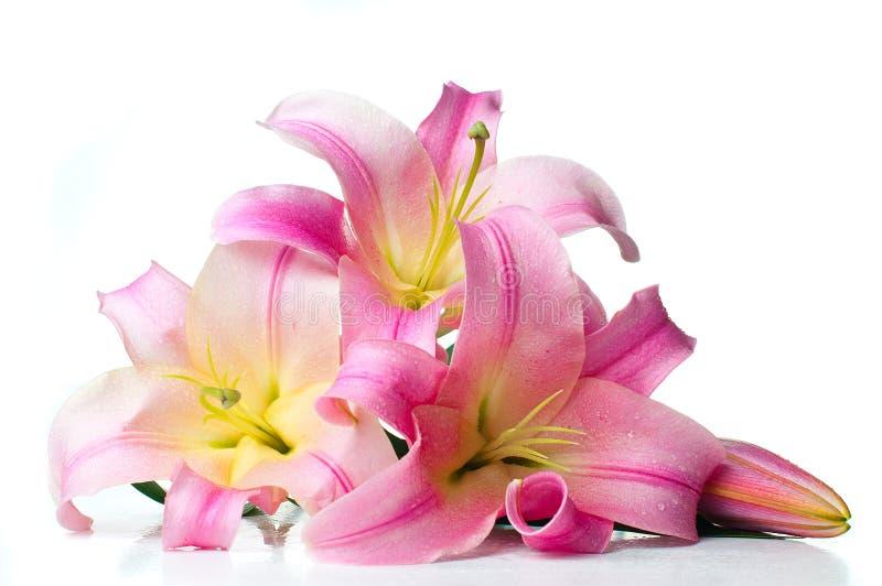 Букет розовых изолированных лилий стоковое фото