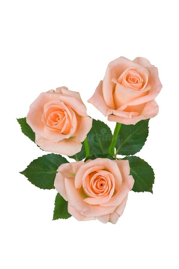 Букет розовых роз на белой предпосылке o стоковые изображения
