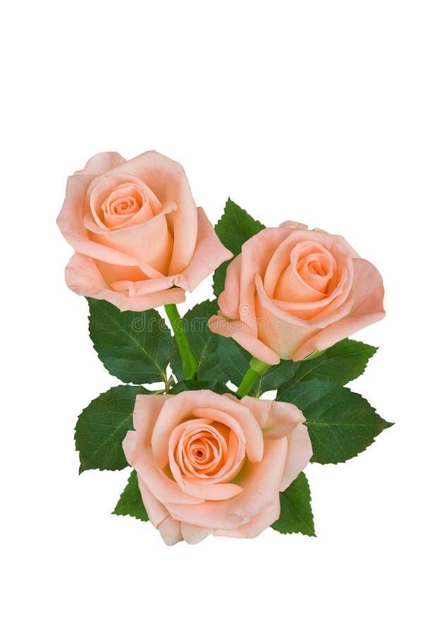 Букет розовых роз на белой предпосылке o стоковое фото rf