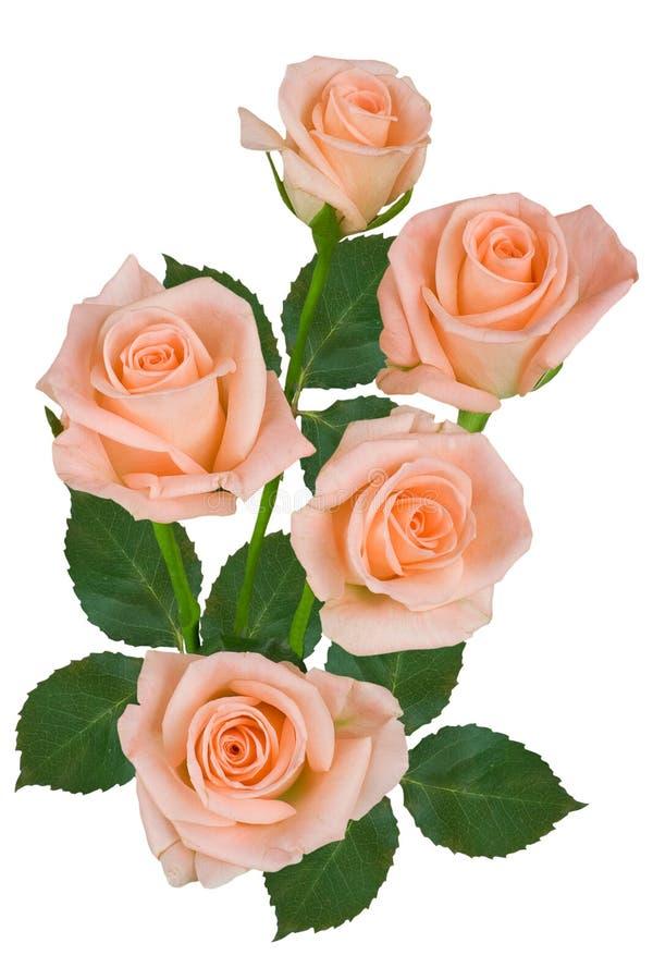 Букет розовых роз на белой предпосылке o стоковые фотографии rf