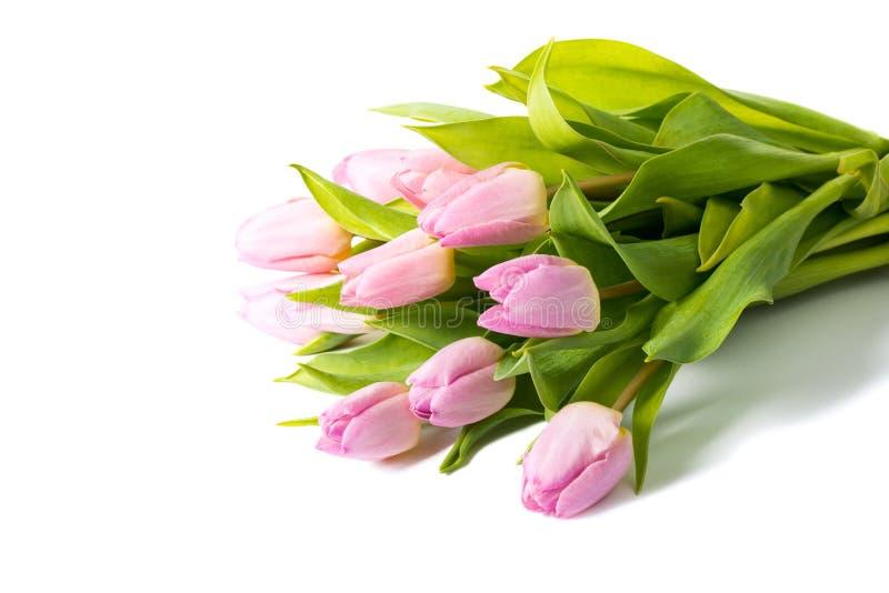 Букет розовых тюльпанов изолированных на белой предпосылке стоковые изображения rf