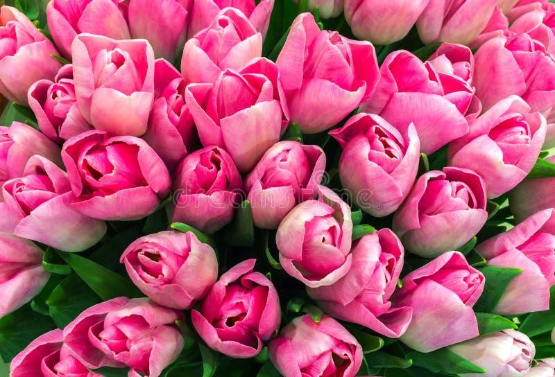 Букет розовых тюльпанов крупного плана, взгляд сверху цветки весны для стоковые фотографии rf