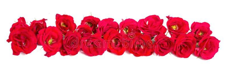 Букет роз аранжированных к форме элемента границы или дизайна для флористических тем стоковая фотография rf