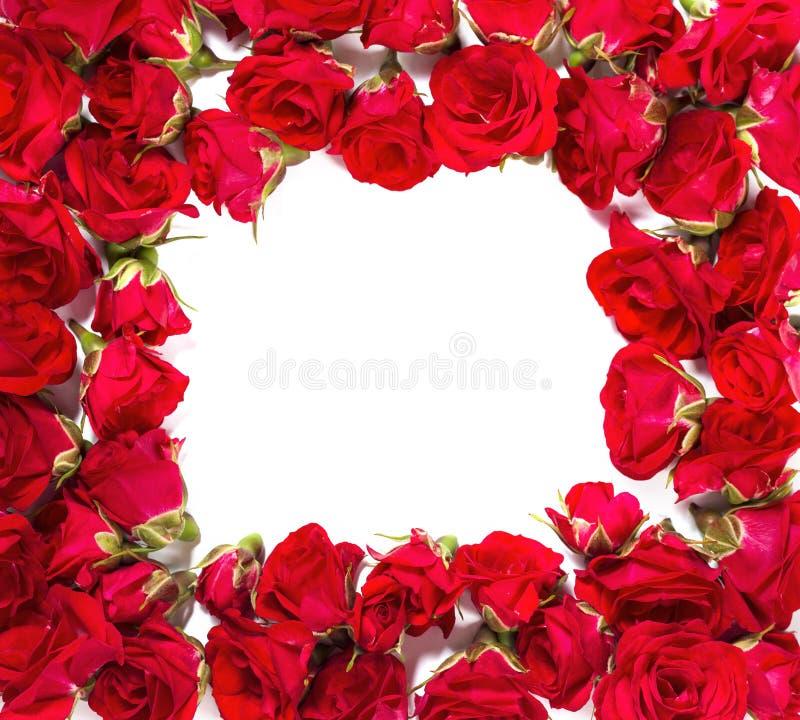 Букет роз аранжированных, что сформировать рамку или конструировать элемент для флористических тем стоковая фотография