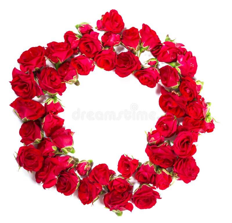 Букет роз аранжированных, что сформировать элемент кольца или дизайна для флористических тем стоковые фото