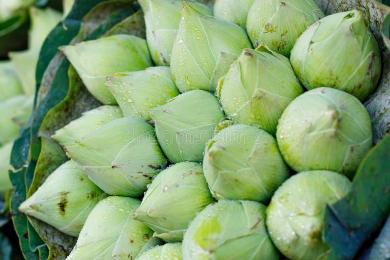 Букет свежего зеленого лотоса отпочковывается с предпосылкой падений дождя на рынке цветка, Таиланде стоковое изображение rf