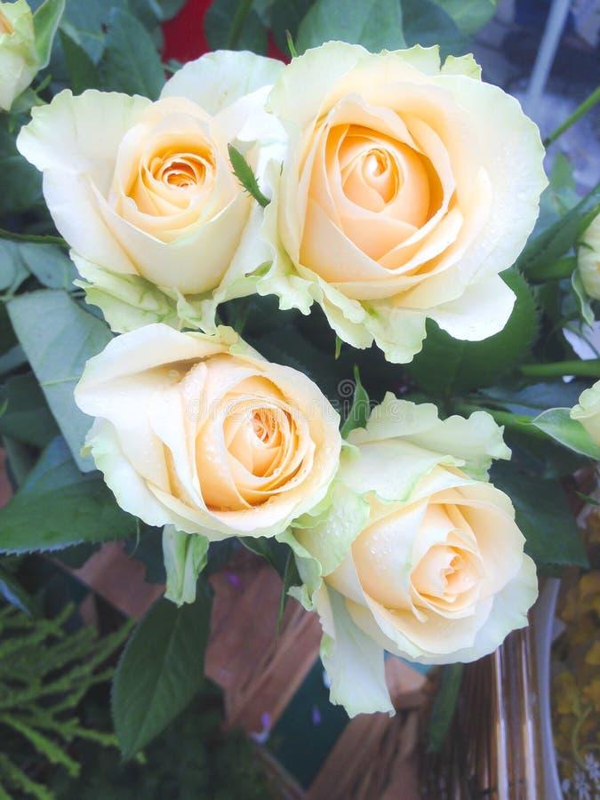 Букет светлооранжевых роз стоковое изображение rf