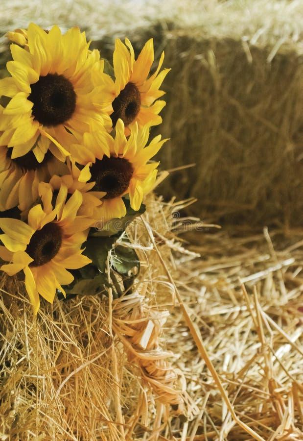 Букет солнцецвета стоковое фото rf