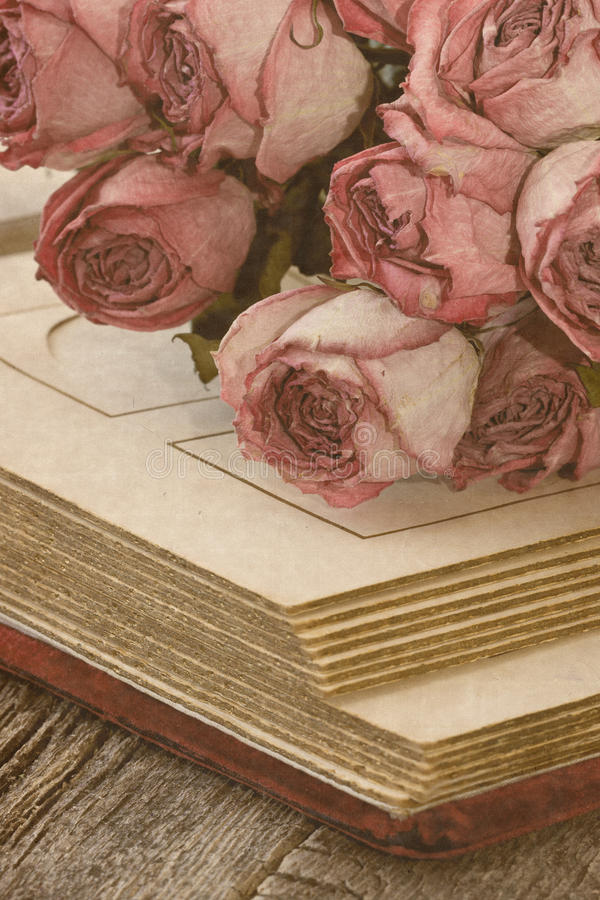 Сухие розы стоковые изображения