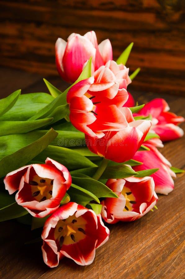 Букет тюльпанов на дереве Красивые тюльпаны на деревянных досках Красно-белые тюльпаны на деревянных досках стоковое фото