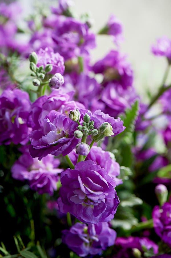 Букет фиолетового Mattioli, упакованный в фиолетовой бумаге На белой предпосылке флористическо стоковое фото