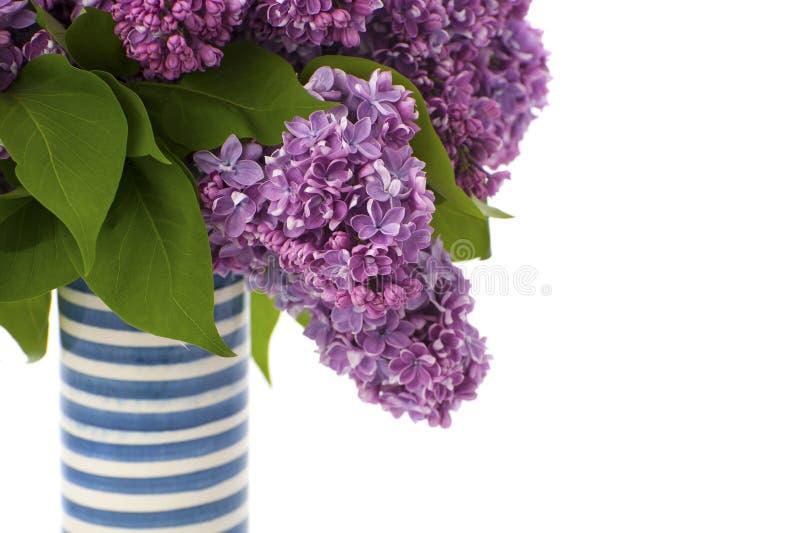 Букет фиолетовых сиреней в striped керамической вазе стоковое фото