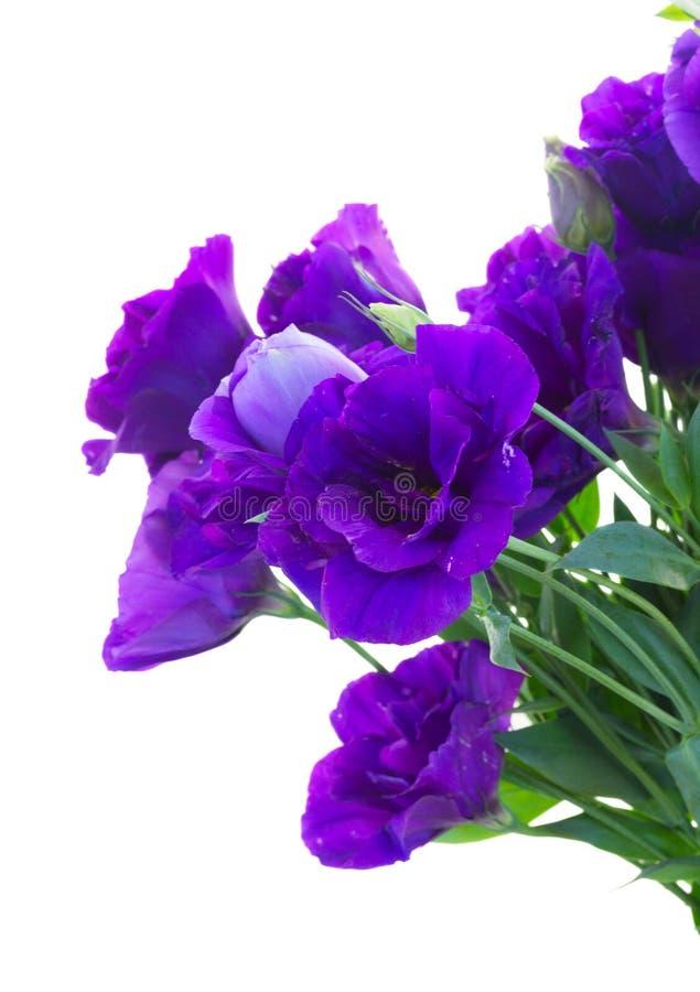 Букет фиолетовых цветков eustoma стоковая фотография