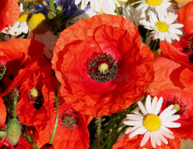 Букет цветка лета стоковые фотографии rf