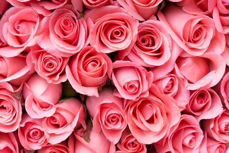 букет цветка розы пинка стоковые фото