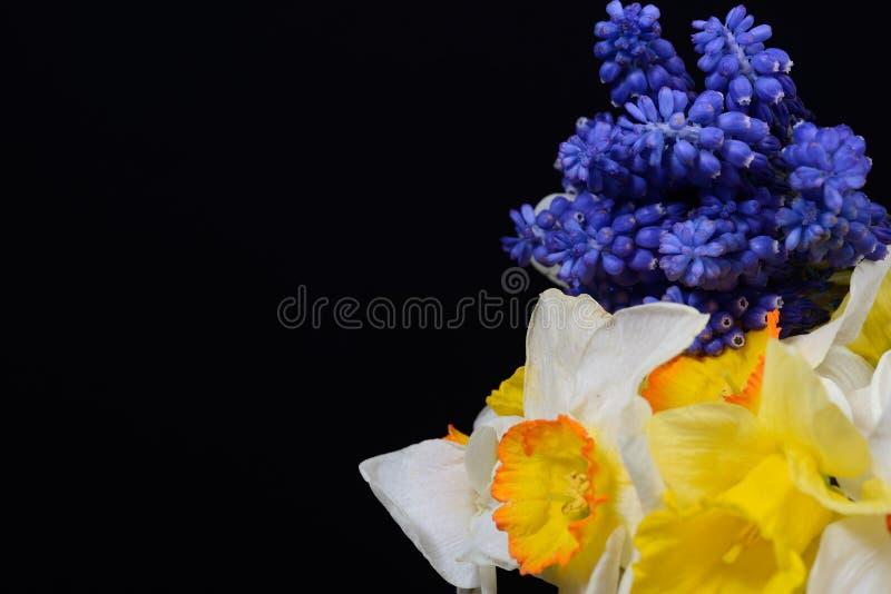 Букет цветки голубого armeniacum виноградного гиацинта, Muscari и y стоковые изображения rf