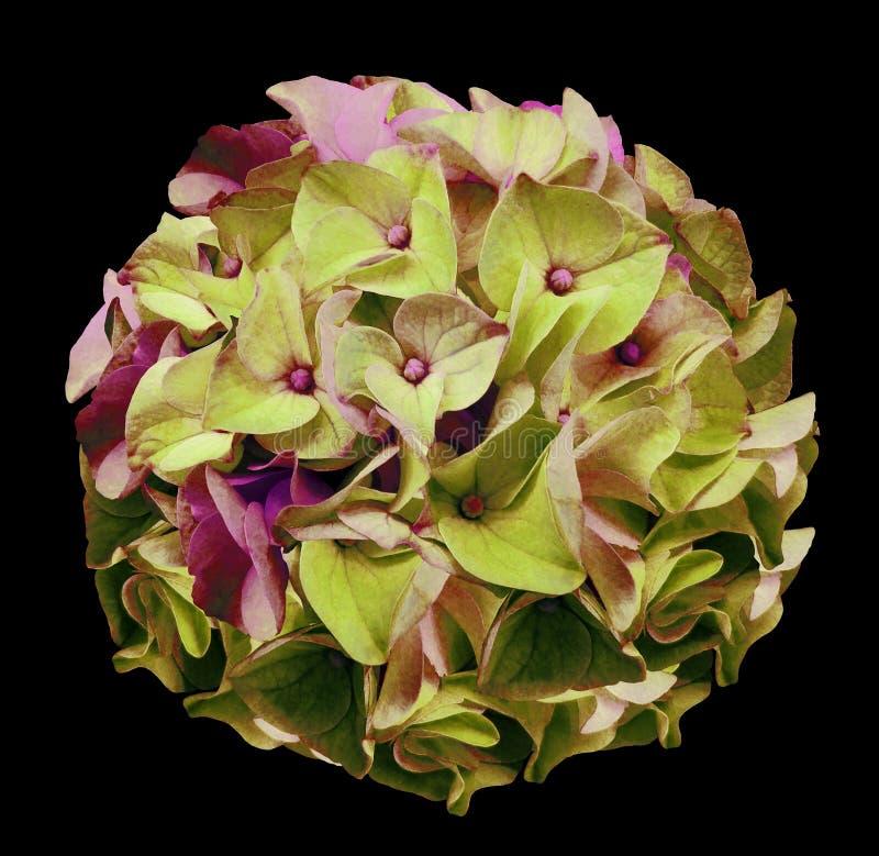 Букет цветков весны зелен-розового на черноте изолировал предпосылку Конец-вверх стоковые изображения