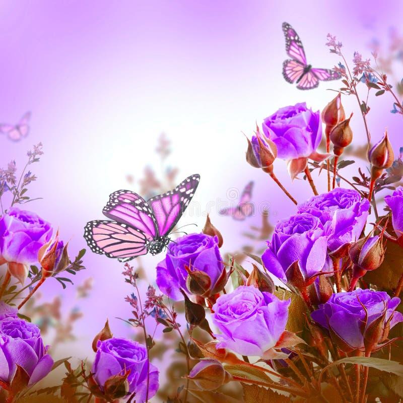 Букет чувствительных роз и бабочки, флористический стоковые изображения rf