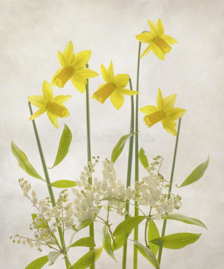 Букет Narcissus и радужки стоковая фотография