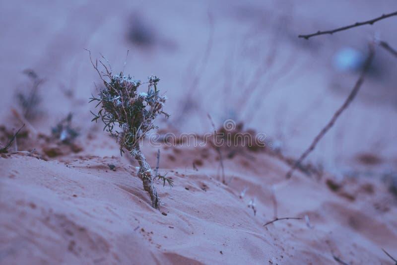 Букет Wildflower стоковое изображение rf