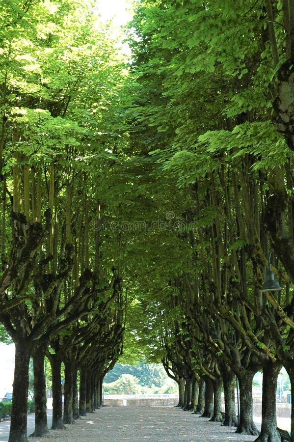 Бульвар деревьев стоковая фотография
