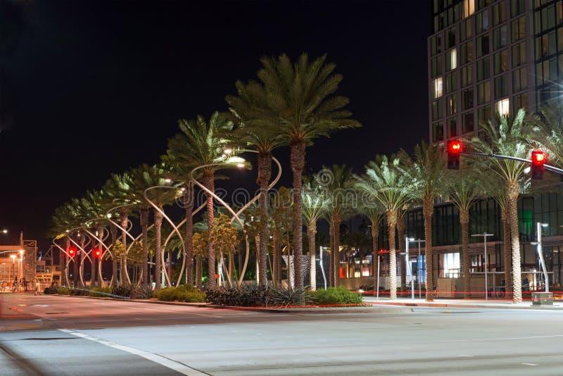 Бульвар зеленой пальмы городской освещенный в полночи стоковое изображение