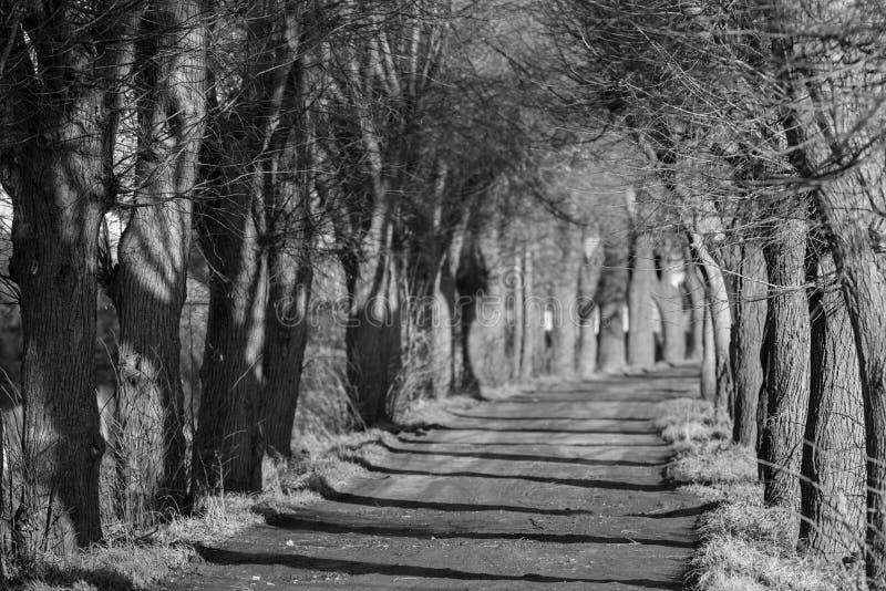 Бульвар осени деревьев в черно-белом стоковая фотография rf