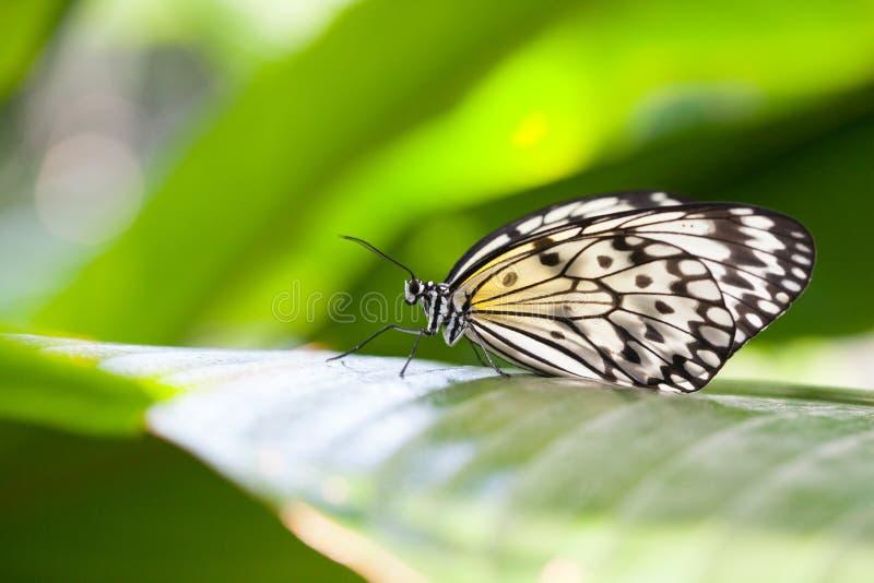 бумага змея бабочки стоковое фото