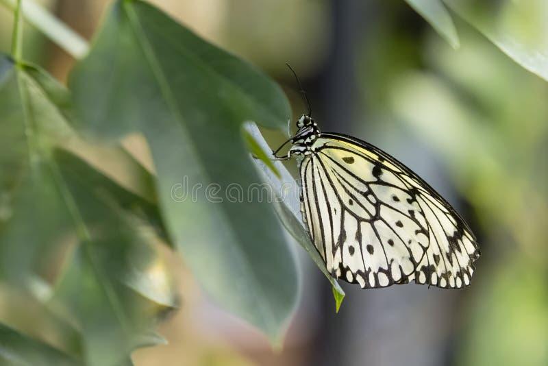 Бумажная бабочка змея стоковая фотография rf