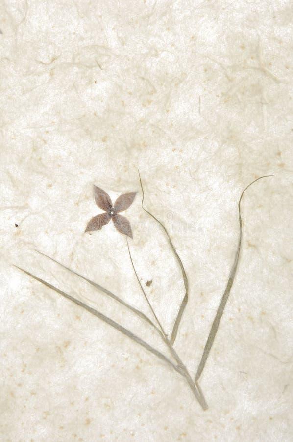 бумажная текстура стоковое фото rf
