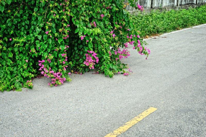 Бумажный цветок на дороге стоковые изображения rf