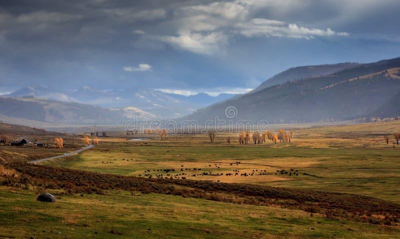 Бурная долина Lamar в Йеллоустон стоковые изображения rf