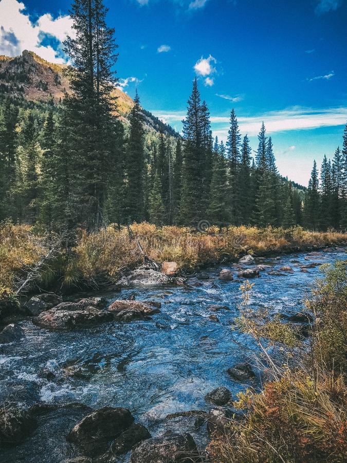 Бурная заводь гор Altai Россия Сентябрь 2018 стоковые фотографии rf