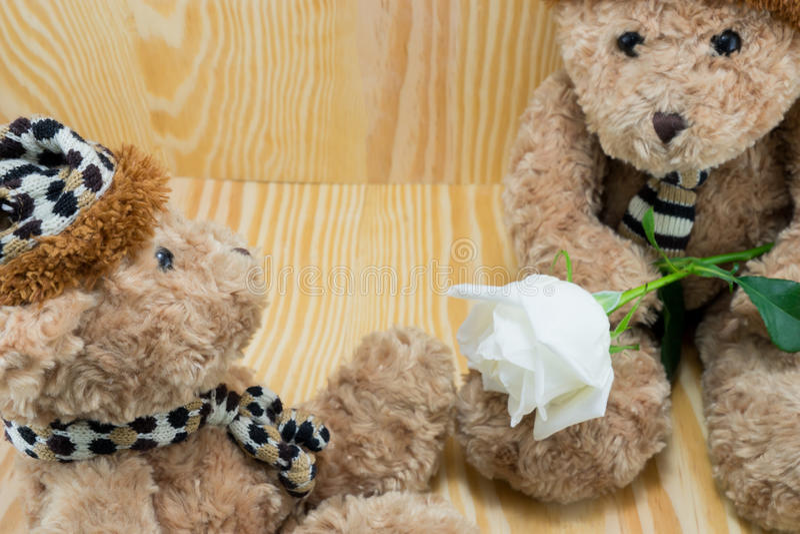 Бурый медведь с цветком белых роз влюбленности стоковые изображения