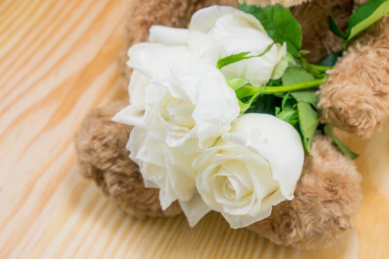 Бурый медведь с цветком белых роз влюбленности стоковые фотографии rf