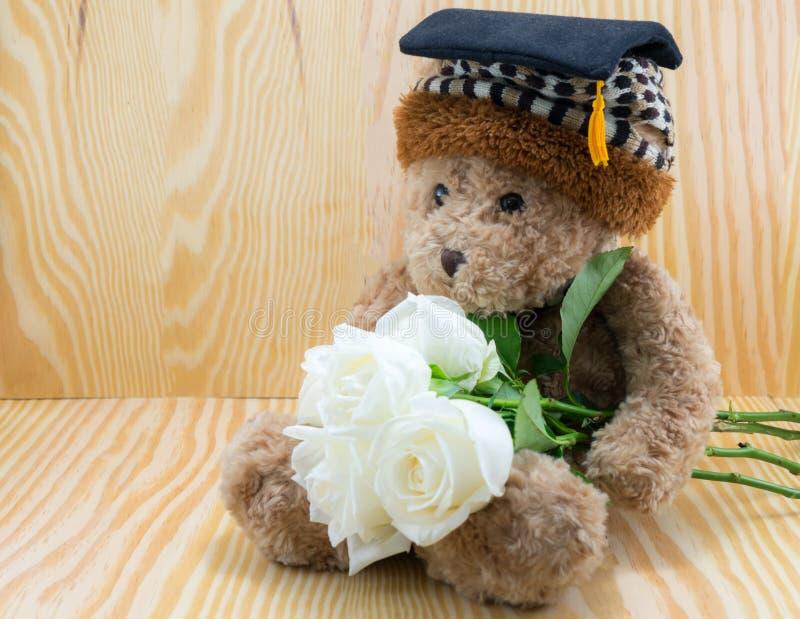 Бурый медведь с цветком белых роз влюбленности стоковое фото rf