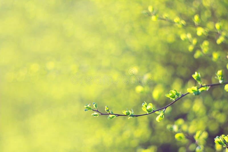 Бутоны весны, малая глубина поля стоковая фотография