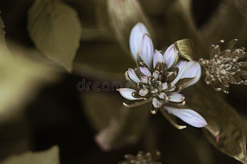 бутоны цветков стоковое изображение