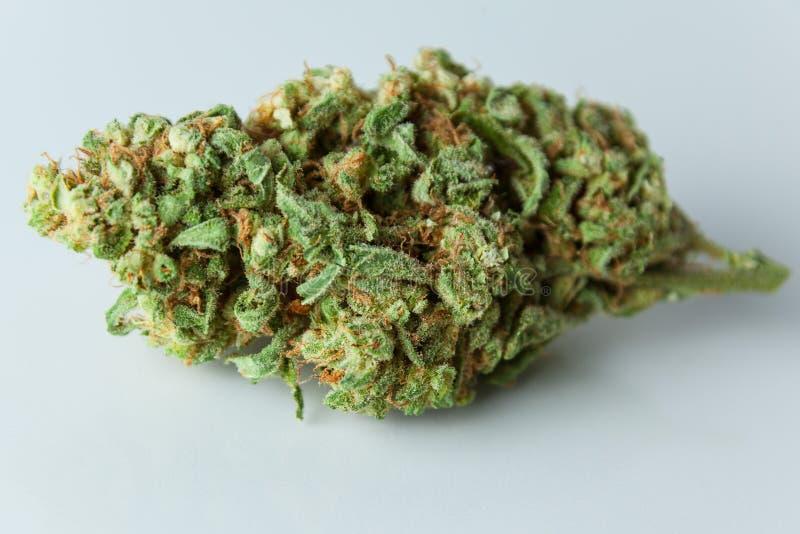 Бутон марихуаны, конопля, бак, близкое засорителя вверх изолированный на белом ба стоковые фотографии rf