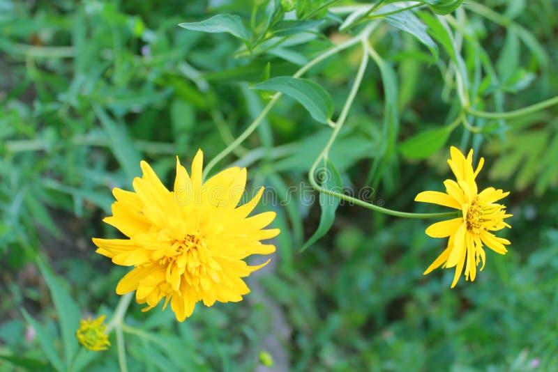 Бутон цветка на предпосылке вегетации стоковая фотография rf