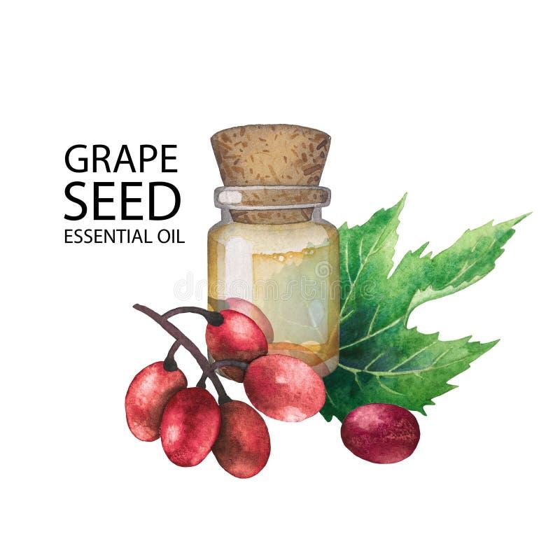 Бутылка акварели эфирного масла сделанная из семени виноградины иллюстрация штока