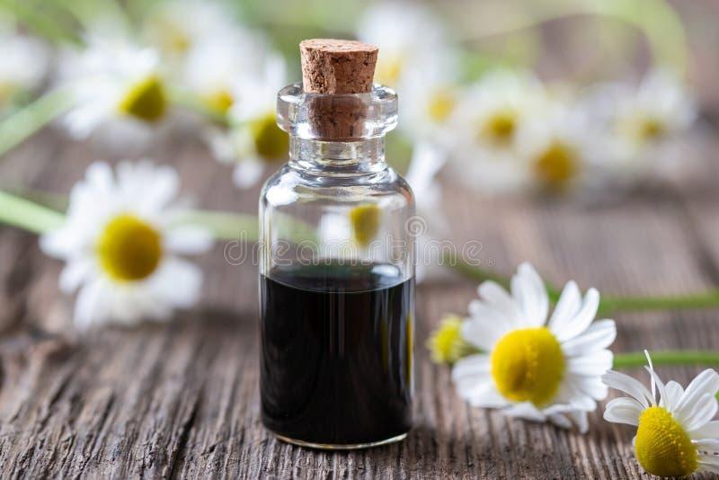 Бутылка темно-синих эфирного масла и цветков стоцвета стоковые фотографии rf