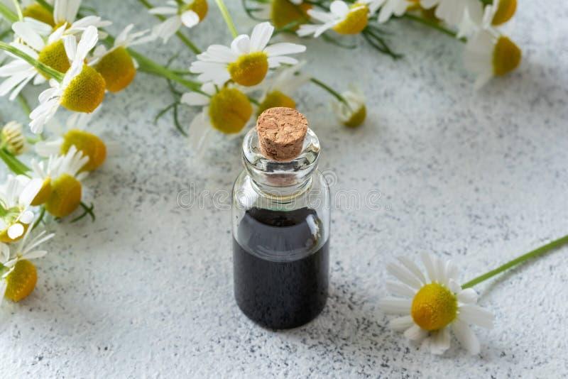 Бутылка темно-синих эфирного масла и цветков стоцвета стоковые изображения rf