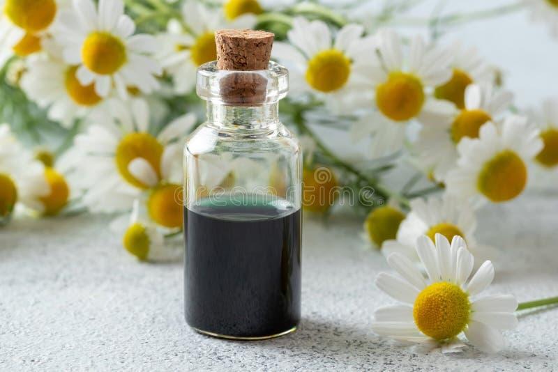 Бутылка темно-синих эфирного масла и цветков стоцвета стоковое фото rf