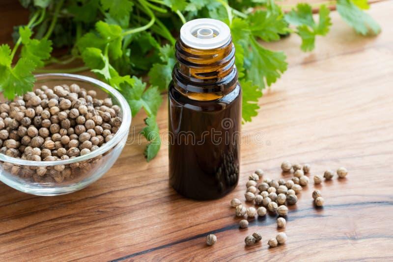 Бутылка эфирного масла кориандра с семенами кориандра и cil стоковые изображения rf