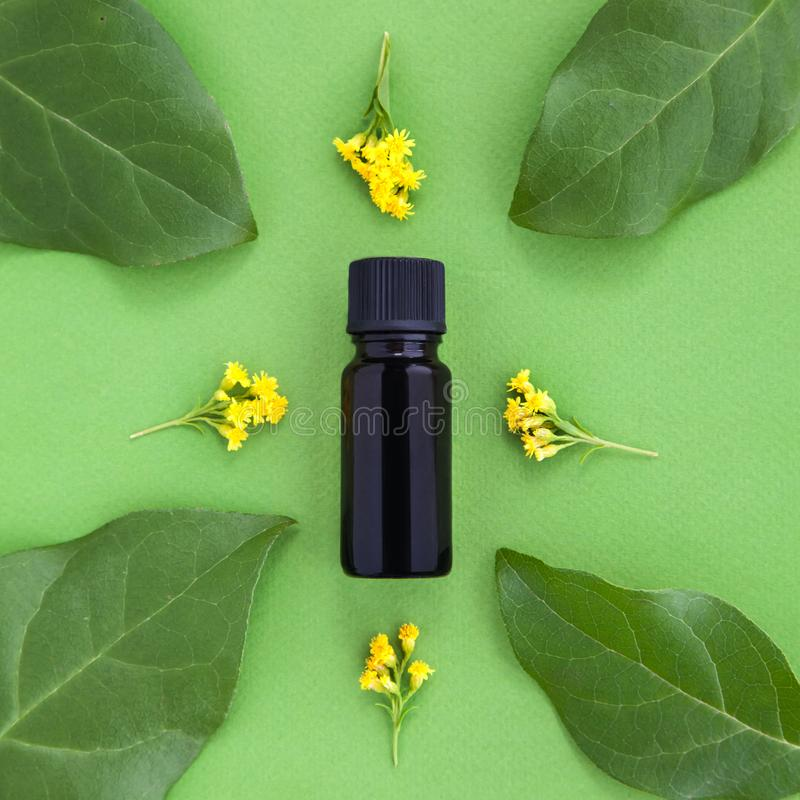 Бутылка эфирного масла со свежими травами и желтыми цветками вокруг на зеленой предпосылке стоковое изображение