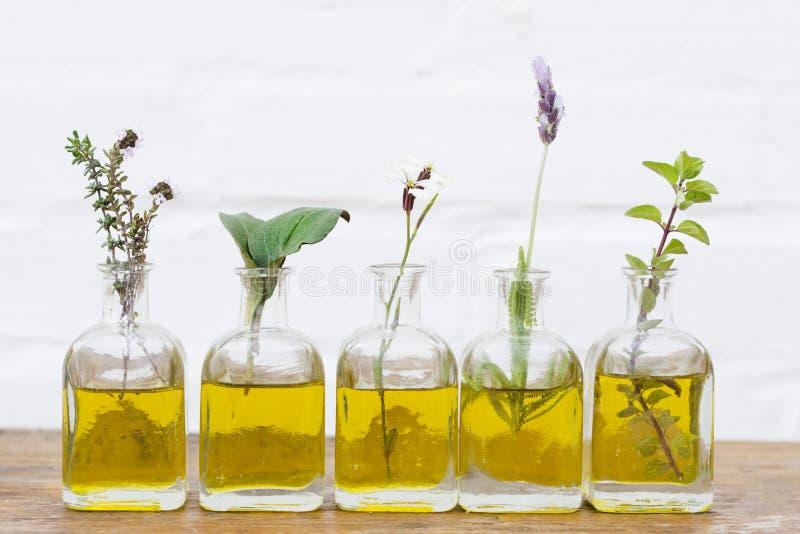 Бутылка эфирного масла с травами настроила на белой предпосылке стоковые изображения