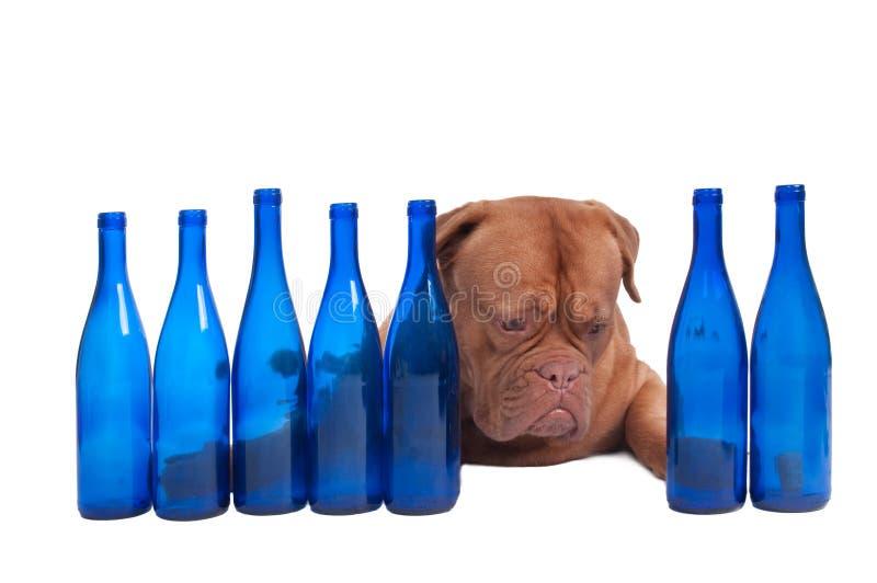 бутылки выслеживают пустую стоковое изображение rf